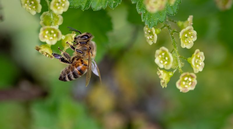 Bee idioms