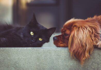 English around the world: cat luck ain't no dog luck
