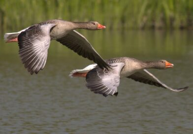 English around the world: What's good for the goose is good for the gander